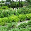 evergreen shrubs-Optimized