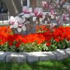 seasonal-spring-color-beds-08-016