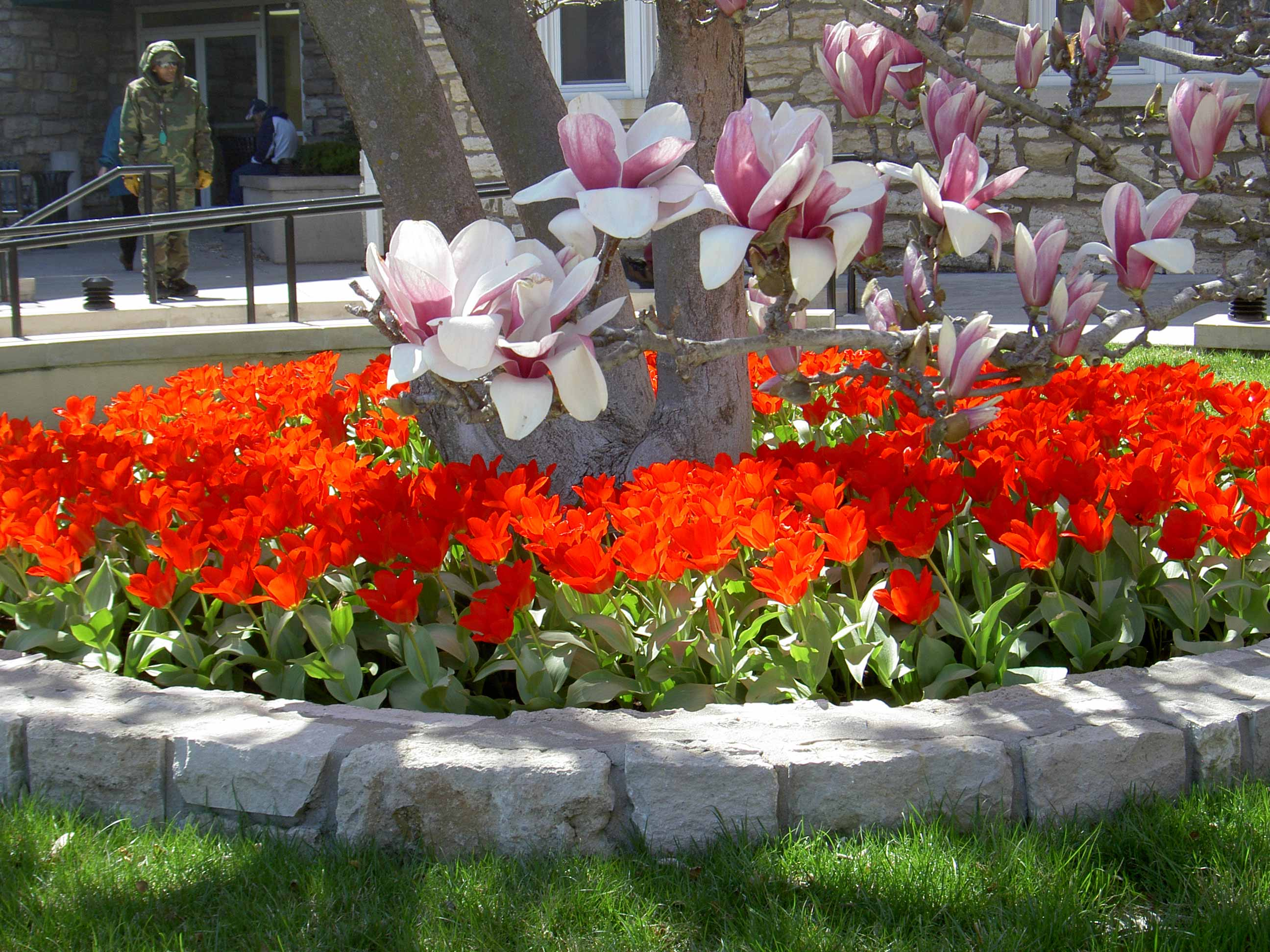 Commercial - spring-color-beds-08-016
