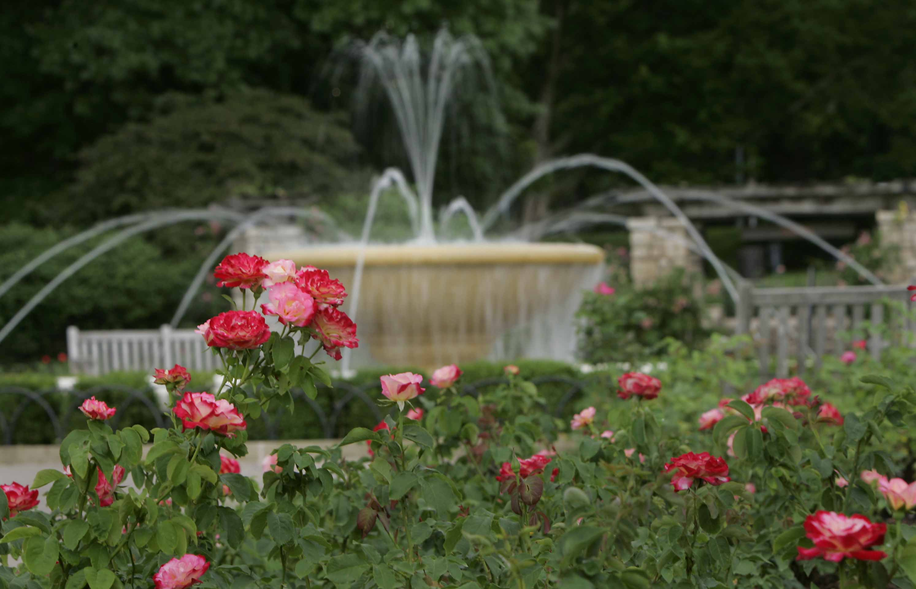 Roses In Garden: Kansas City Commercial Landscaping
