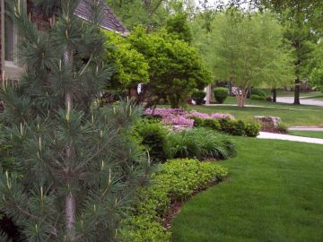 Create Backyard Privacy with Your Landscape Design ...