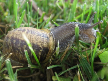 3 Gardening Tips for a Slug-Free Summer