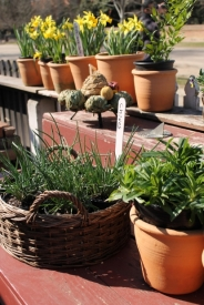 3 Solutions to Fix Cracked Terra-Cotta Pots