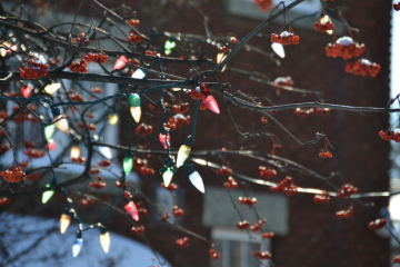 How to String Holiday Lights Around Outdoor Trees